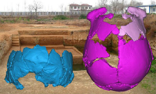 The 3D images of the restoration of the two Xuchang Man skulls [Photo: Xinhua]<br><br><br>