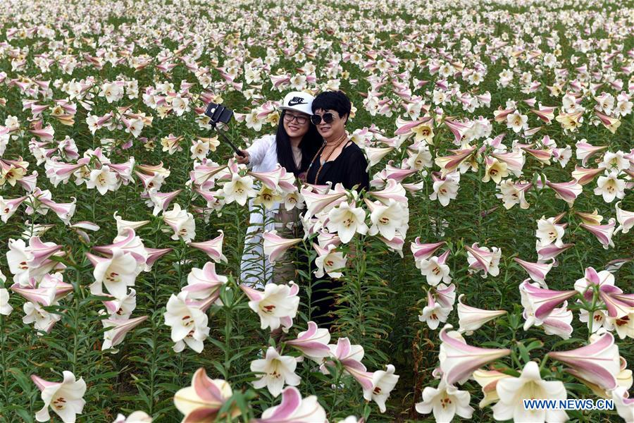 Lily Garden Attracts Visitors In Jiangxi Province E China China